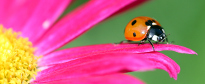 lady bug fling by Terry Spence