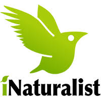 iNaturalist Opens in new window